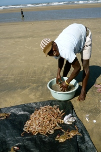 Fisherman w/jumbo shrimp on Zala Beach, Indian Ocean